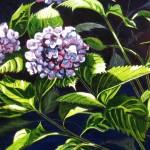 "Hydrangea 16"" x 20"" (oil on canvas) Sold"