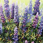 "Lupines 22"" x 28"" (oil on canvas)"