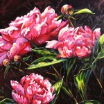 "Peony 20"" x 24"" (oil on canvas) Sold"